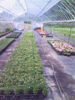花栽培農家
